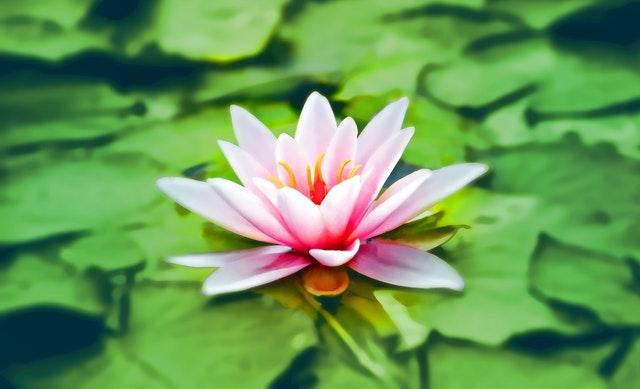 Ce que n'est pas la méditation de pleine conscience